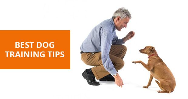 dog training tips and tricks